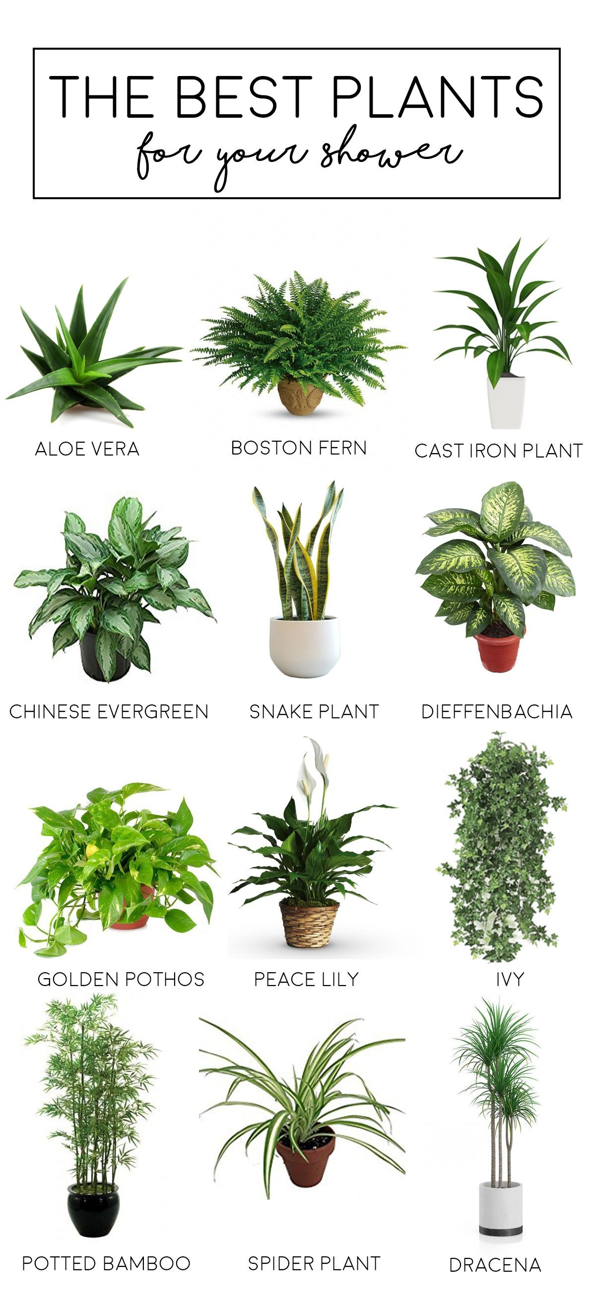 Good Plants for Bathroom Inspirational Blog Inspiration