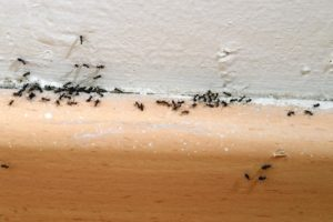 Tiny Black Ants In Bathroom Lovely 9 Simple Steps to Get Rid Of Ants and Keep Ants Out Plan