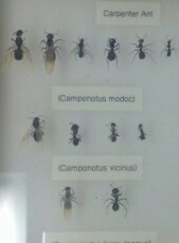 Fascinating Tiny Black Ants In Bathroom Online - Home ...