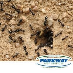 Sensational Tiny Black Ants In Bathroom Concept